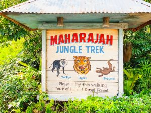 sign with monkey, tiger, and komodo dragon for jungle trek