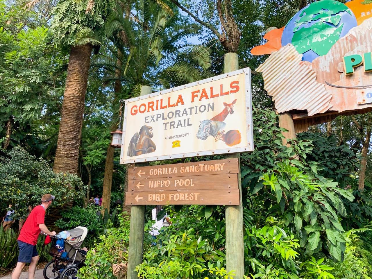 Animal Kingdom Gorilla Falls