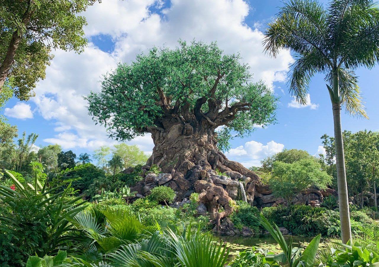 Animal Kingdom Tree of Life